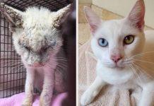 Foto kucing sebelum dan sesudah diadopsi.