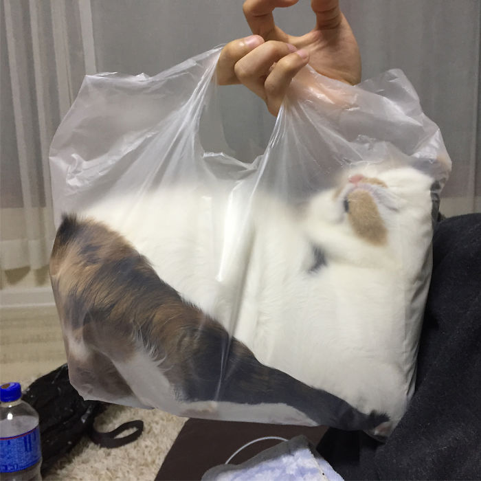 #12. Plastik juga tempat favorit kucing lho.