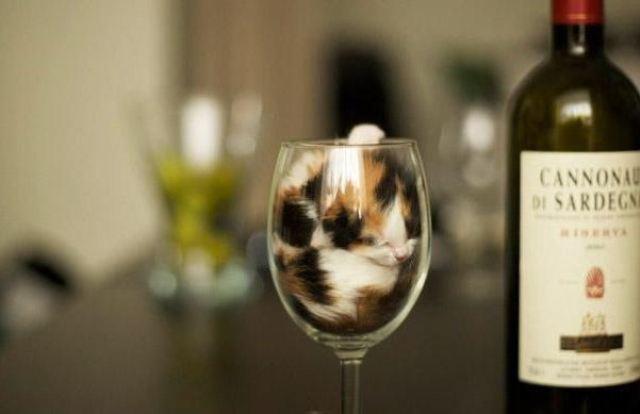 #13. Ada yang tau kadar alkoholnya berapa persen ?.
