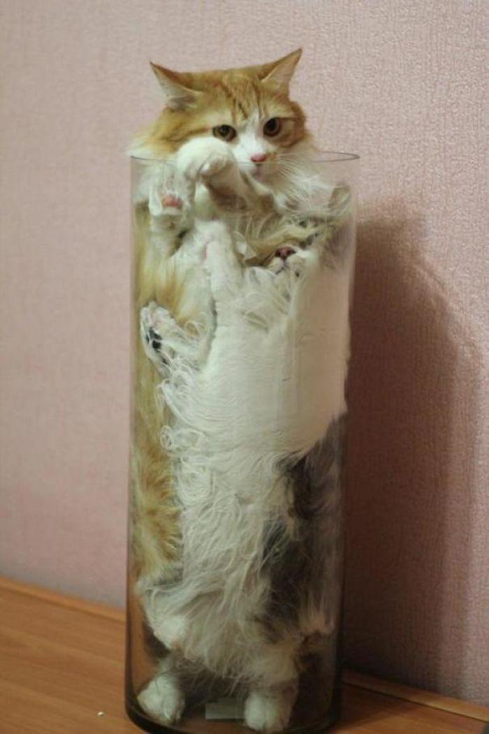 """kucing benda cair3 - 13 Photo Bukti Kucing adalah """"Benda Cair"""""""