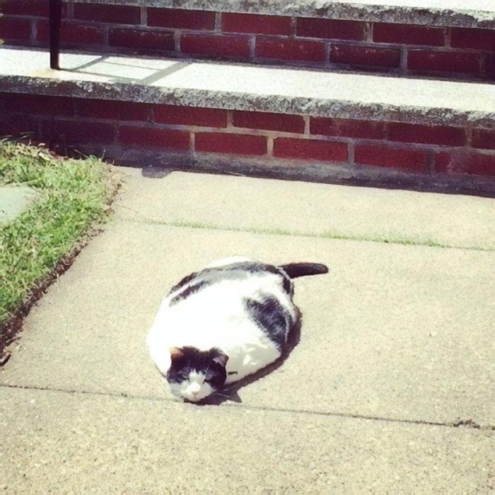 """kucing benda cair5 - 13 Photo Bukti Kucing adalah """"Benda Cair"""""""