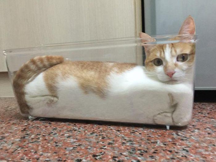 """kucing benda cair7 - 13 Photo Bukti Kucing adalah """"Benda Cair"""""""