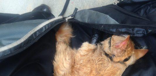 Saat ditemukan, kucing malang tersebut terikat kencang dibagian kaki, mulut serta leher.