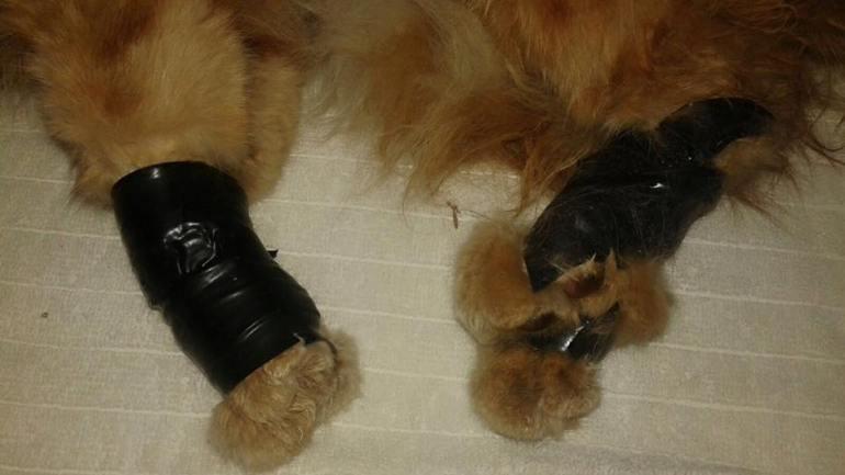 kucing malang1 - Malang, Seekor Kucing Ditemukan dalam Tas dengan Kaki, Mulut Serta Leher Terikat Lakban