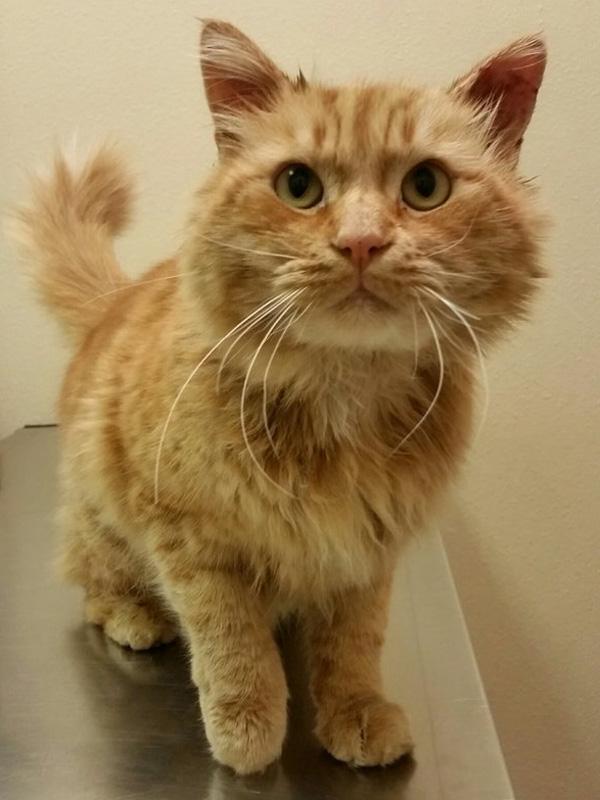 kucing malang2 - Malang, Seekor Kucing Ditemukan dalam Tas dengan Kaki, Mulut Serta Leher Terikat Lakban