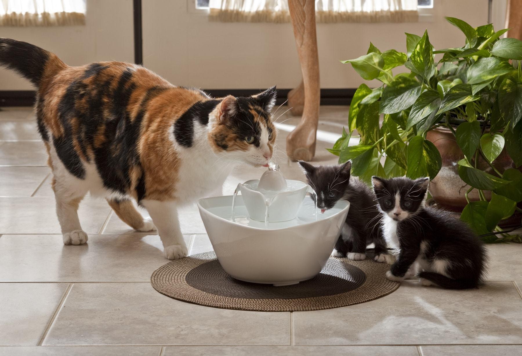 kucingminum6 - 6 Trik Mudah yang Bisa Kamu Terapkan agar Kucingmu Mau Minum Lebih Banyak