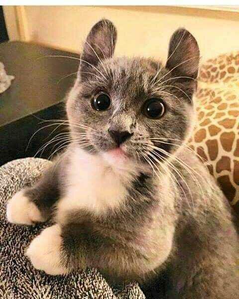 Suhu telinga kucing bergantung pada suhu lingkungannya.