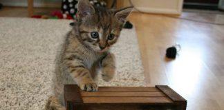 Siapa bilang kucing tidak bisa berkspresi seperti manusia ?.