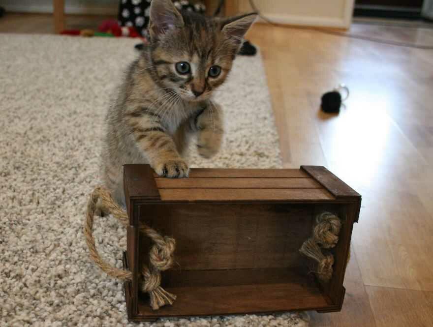 20170109210725 - 11 Tampang Aneh Kucing yang Bikin Kita Jadi Gregetan