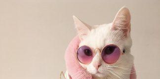Zappa, kucing sosialita dengan gaya trendi dan stylish.
