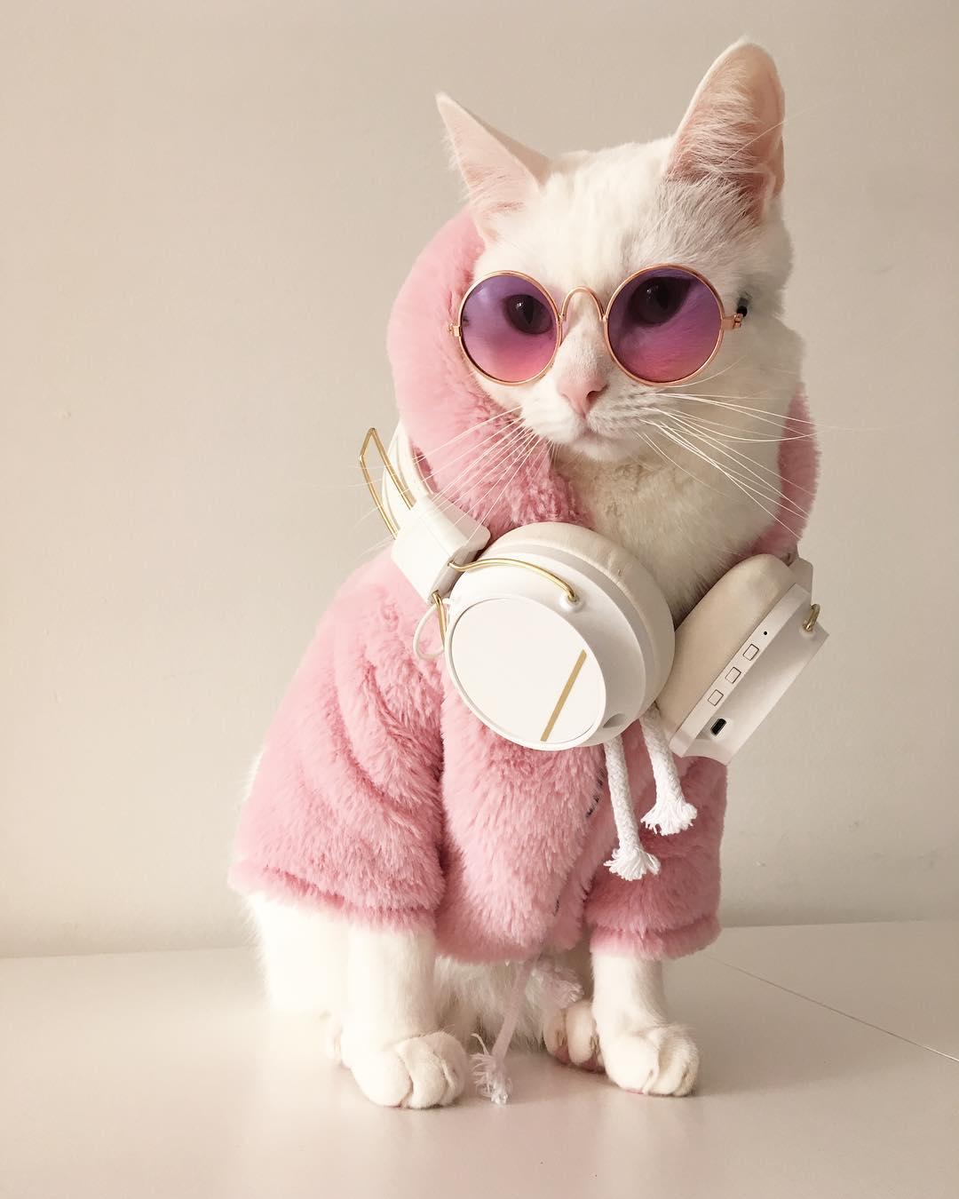 24254100 1837326366559284 7027246320859480064 n - Zappa, Kucing Sosialita dengan Gaya Trendi dan Stylish