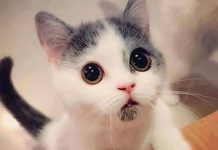 Menonton video kucing lucu meningkatkan produktiivitas kerja.