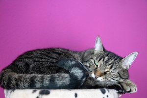 cat 3330435 1920 300x200 - Waspada Ketika Kucing Muntah