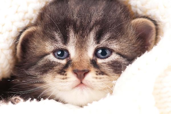 cat crying - Benarkah Kucing Mengeluarkan Air Mata Tanda Ia Sedang Menangis ?