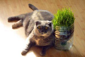 fat 1517449 1920 300x200 - Tips Simple Membuat Kucing Menjadi Gemuk