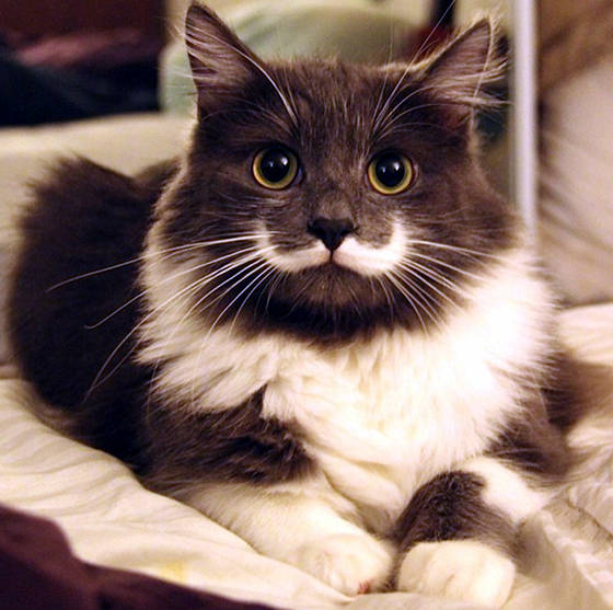 Penyebab dan cara mengatasi kerontokan pada bulu kucing.