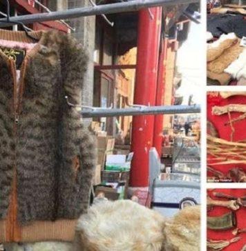 Dijual murah dan dalam berbagai corak, jaket bulu cantik ini ternyata dibuat dari kucing yang dikuliti. Gambar : DailyMail.