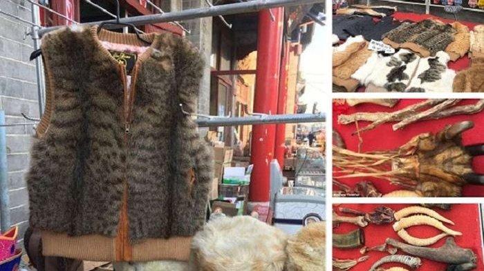 jaket dari kucing - Dijual Murah dan Dalam Berbagai Corak, Siapa Sangka Jaket Cantik ini Terbuat dari Kucing