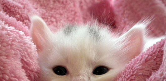 menyentuh anak kucing