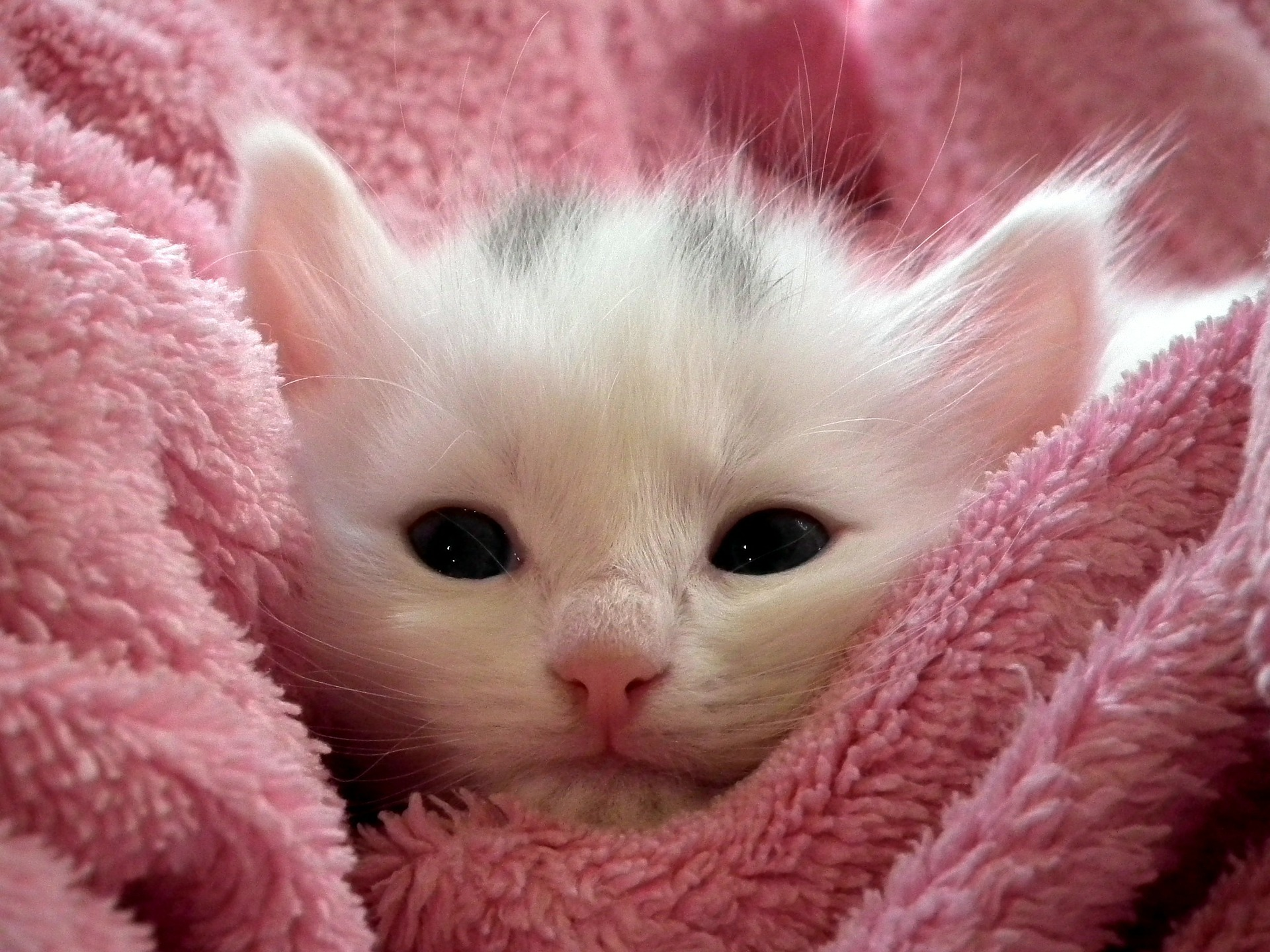 Download 101+  Gambar Kucing Yg Imut Dan Lucu Paling Bagus HD