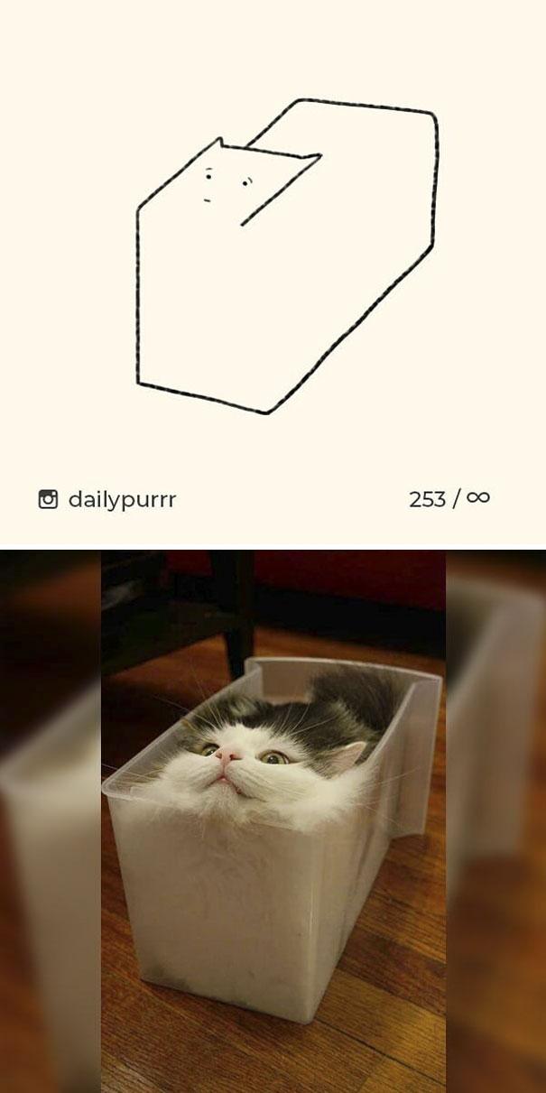 kucing konyol1 - 13 Gambar Kucing ini Dibilang Aneh, Padahal Mirip Aslinya