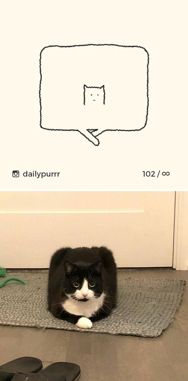 kucing konyol11 - 13 Gambar Kucing ini Dibilang Aneh, Padahal Mirip Aslinya