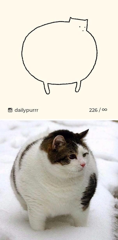 kucing konyol12 - 13 Gambar Kucing ini Dibilang Aneh, Padahal Mirip Aslinya