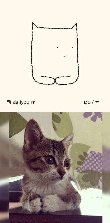 kucing konyol13 - 13 Gambar Kucing ini Dibilang Aneh, Padahal Mirip Aslinya