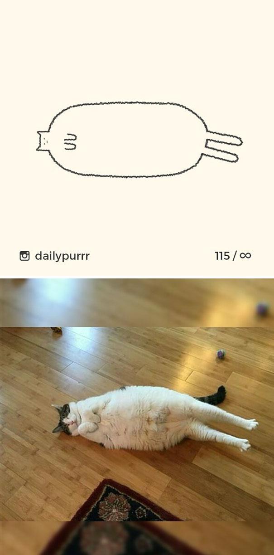 kucing konyol3 - 13 Gambar Kucing ini Dibilang Aneh, Padahal Mirip Aslinya
