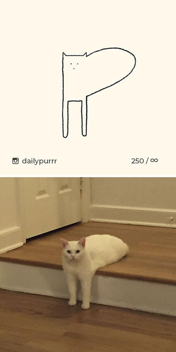 kucing konyol5 - 13 Gambar Kucing ini Dibilang Aneh, Padahal Mirip Aslinya