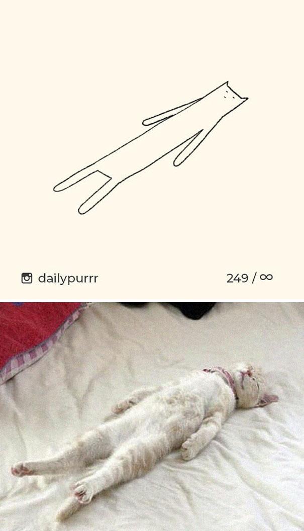 kucing konyol7 - 13 Gambar Kucing ini Dibilang Aneh, Padahal Mirip Aslinya