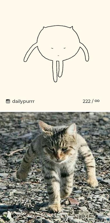 kucing konyol8 - 13 Gambar Kucing ini Dibilang Aneh, Padahal Mirip Aslinya