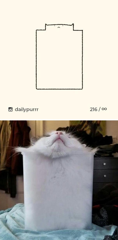 kucing konyol9 - 13 Gambar Kucing ini Dibilang Aneh, Padahal Mirip Aslinya