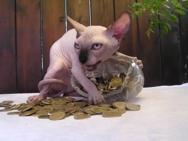 Download 100+  Gambar Kucing Jelek Paling Imut Gratis