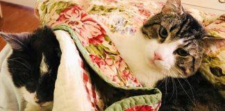 Betsy Bond, wanita asal Amerika ini rela merogoh kocek hingga US$19k untuk operasi ginjal kucing kesayangannya.