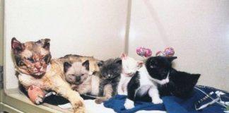 Scarlett, induk kucing pemberani yang menyelamatkan anak-anaknya dari kebakaran pada tahun 1996.