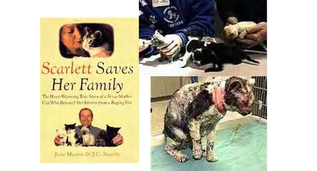 scarlet the cat1 - Scarlett, Induk Kucing Pemberani Selamatkan Anak-anaknya dari Kebakaran