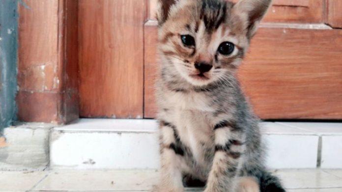 surat dari lucky, kucing kecil yang mungkin kamu tak akan peduli. Via :