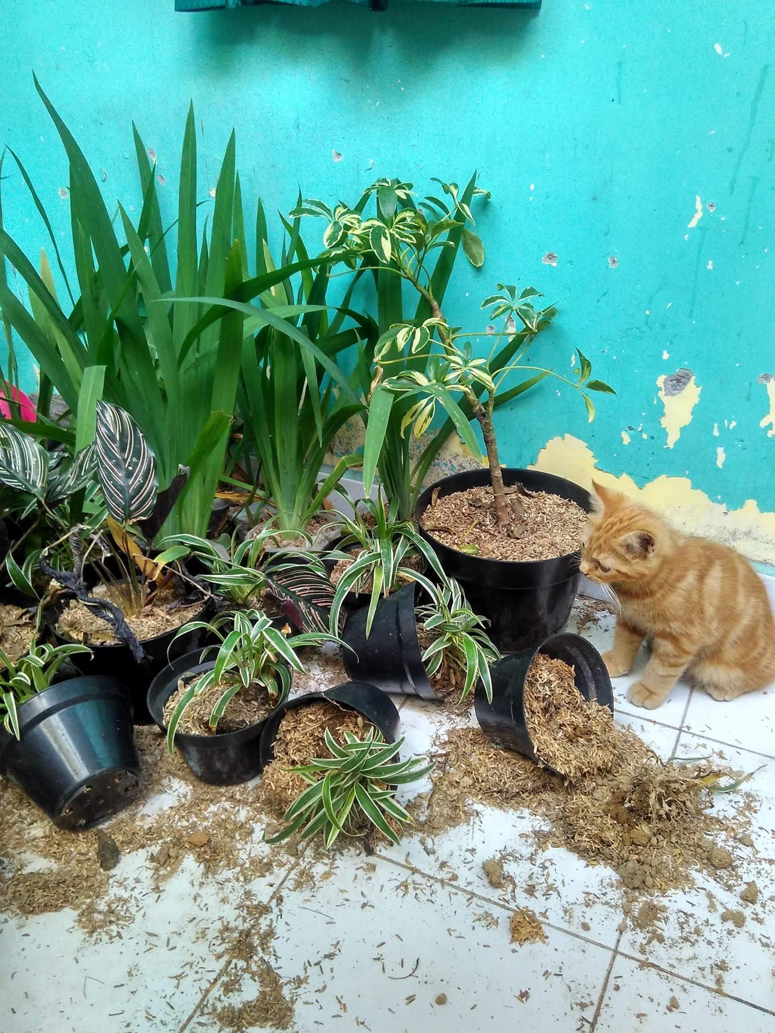 yayas ndut fdsbkr - 11 Tampang Aneh Kucing yang Bikin Kita Jadi Gregetan