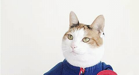 6 Aksi heroik Kucing pemberani penyelamat manusianya.