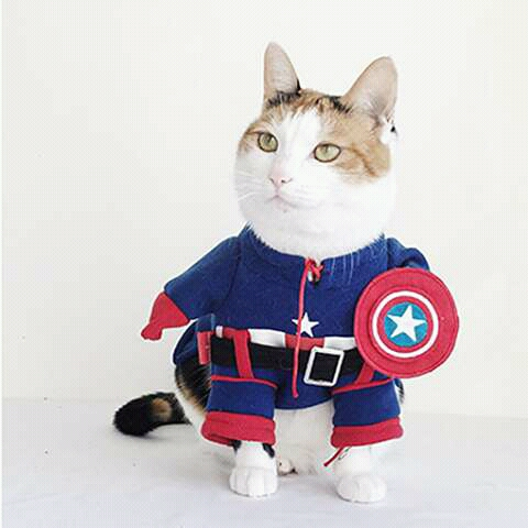 FB IMG 14647772677696426 - 6 Aksi Penyelamatan Luar Biasa dari Kucing Heroik di Dunia