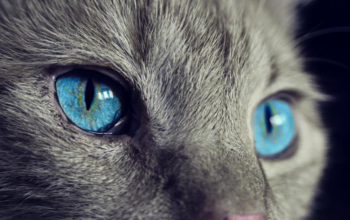 emosi kucing