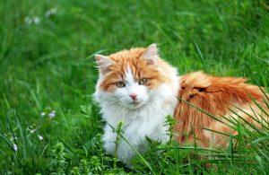 cat 1319044 1280 300x195 - Ingin Pelihara Kucing Jantan ? Kenali Dulu Perilakunya