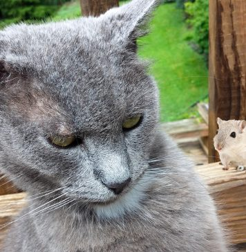 kucing zaman now