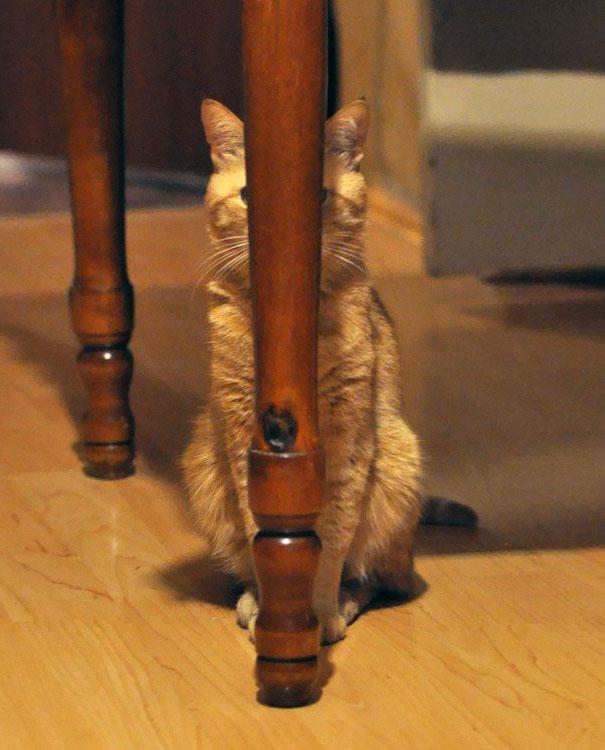 kamuflase kucing - 13 Aksi Kamuflase Kucing Yang Menggemaskan. Kamu Bisa Melihatnya ?