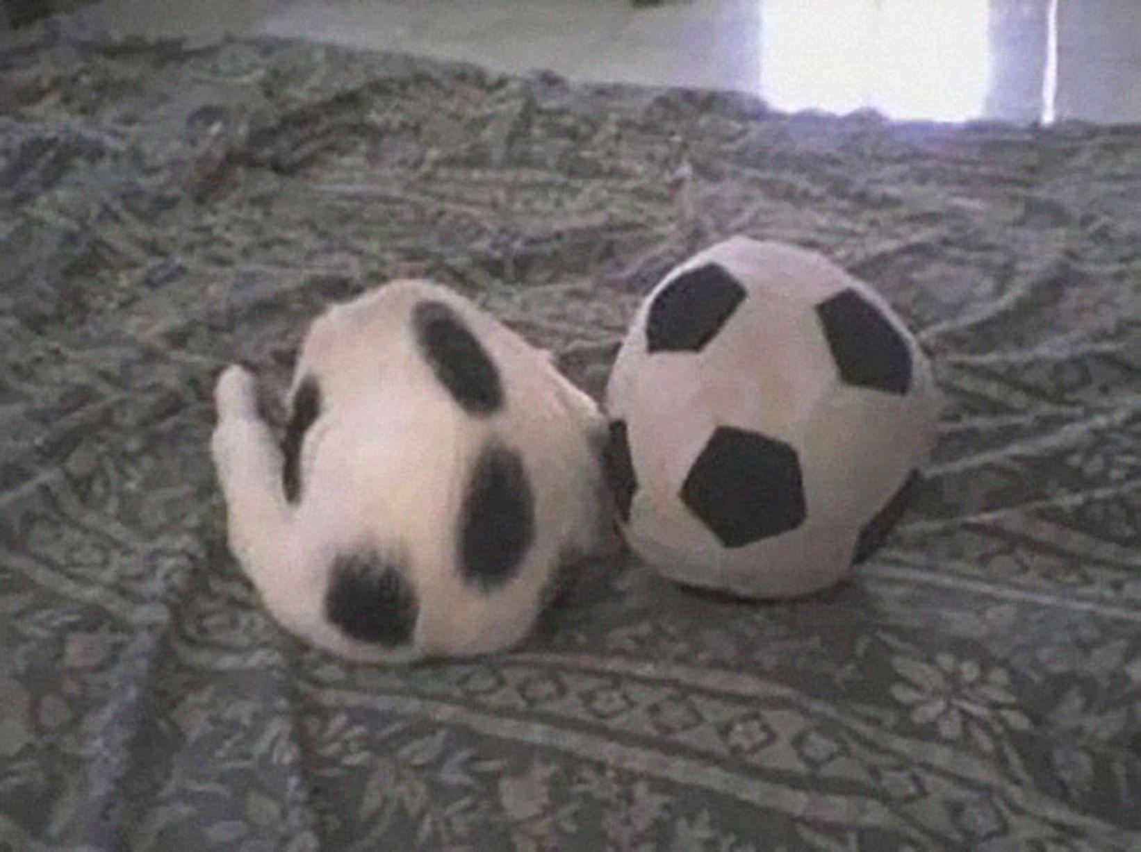 Bola asli yang mana ya ?