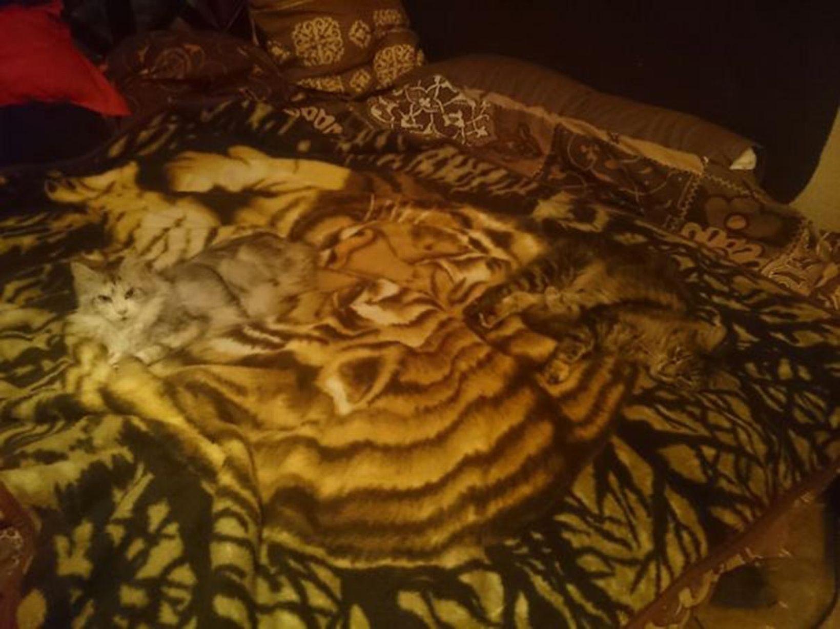 kamuflase kucing13 - 13 Aksi Kamuflase Kucing Yang Menggemaskan. Kamu Bisa Melihatnya ?