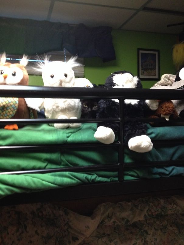 kamuflase kucing3 - 13 Aksi Kamuflase Kucing Yang Menggemaskan. Kamu Bisa Melihatnya ?