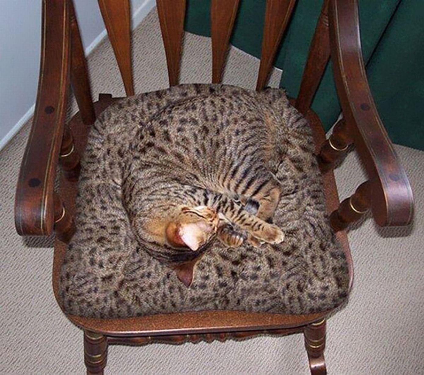 kamuflase kucing5 - 13 Aksi Kamuflase Kucing Yang Menggemaskan. Kamu Bisa Melihatnya ?