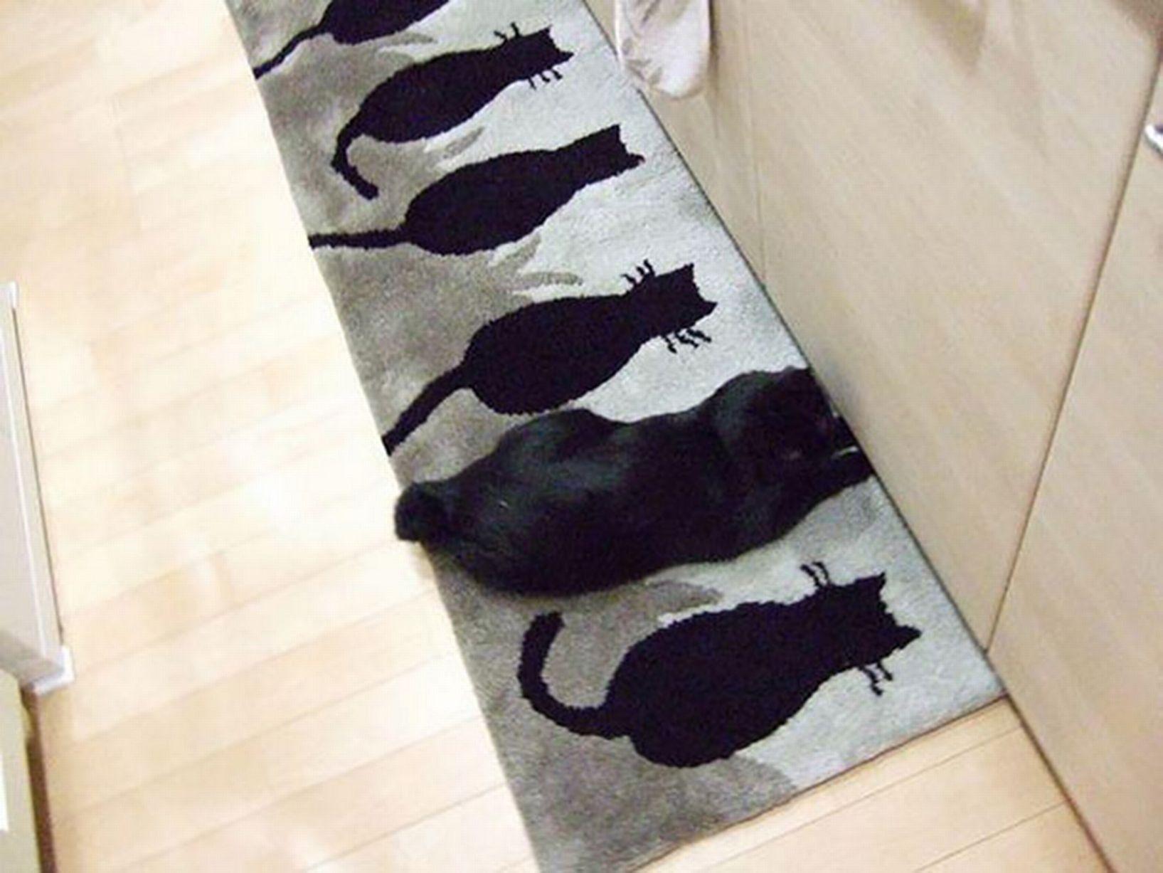 kamuflase kucing9 - 13 Aksi Kamuflase Kucing Yang Menggemaskan. Kamu Bisa Melihatnya ?